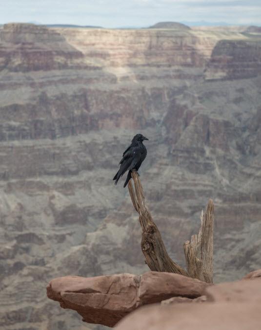 Armenia Haghpat bird